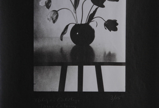 Toni Catany Tulipanes, 1982, Calotype. Vintage print. Single copy © Toni Catany. Exhibitor: Rocio Santa Cruz