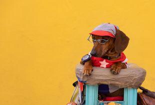Cuban Cool Dog