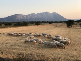 Gathering of the flock at sunset.