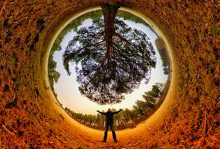 Standing under the Tree of Life