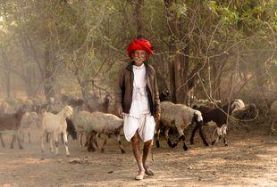 Rabari herder