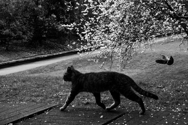 Gulbenkian's cat