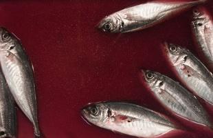 Al mercato del pesce di Tsukiji