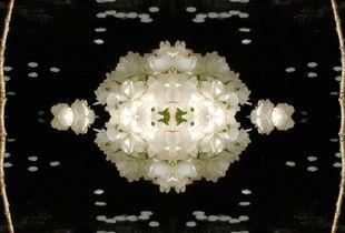 'double waterflower'