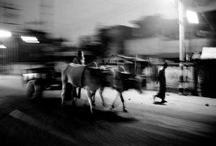 The ox-cart / Le char à boeufs