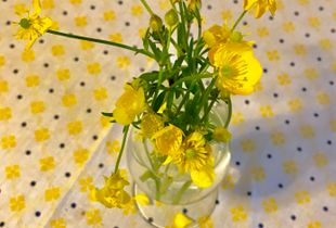 Still life with buttercups