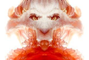 Pomelo Tigress I