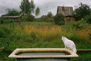 Gardener's cat Lancelot.