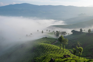 The tea estates of Munnar