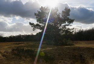 Dolmens near the Halvterberg near Darp