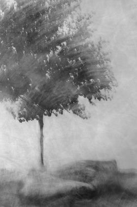 Tree of...
