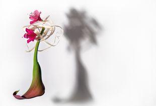 Floral Dolls. Anna Karenina