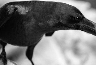 BLACK BIRD LAND-5