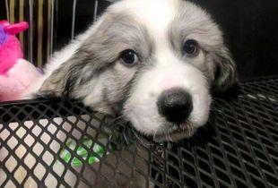 Magnum Puppy