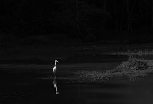 The Day of the Egret
