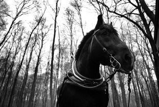 workhorse - Rückepferd
