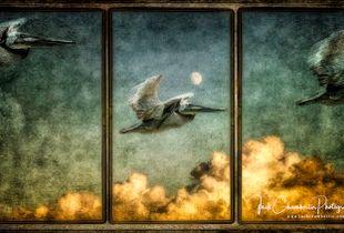 Pelican Triptych