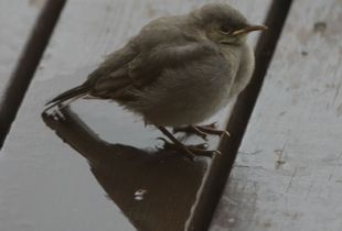 hungry young bird