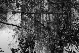 Reflections I