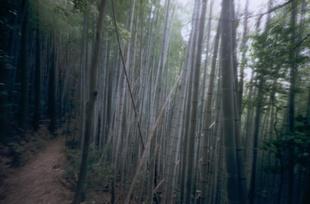 Japan, Shikoku Pelgrimage - blue bamboo.