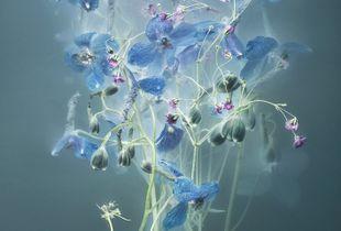Florilegium P51