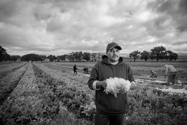 Cruz_ Immigrant Farm Worker