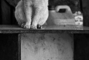 Top Shelf Cat