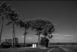 roadshot (1)