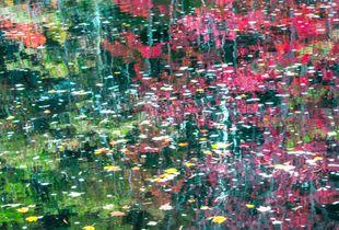 Water Colors - Autumn in Nova Scotia