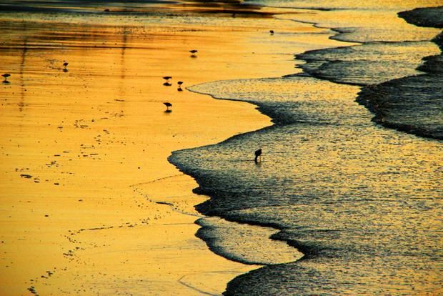 Gold powder on beach