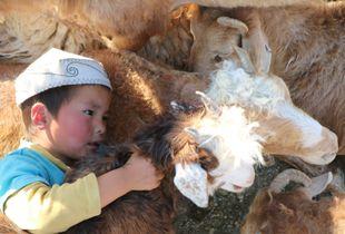 Kazakh Child with Goats. Bayan Olgii, Western Mongolia. 2017.