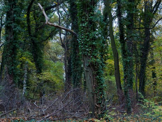 Brandenburg Forests 01