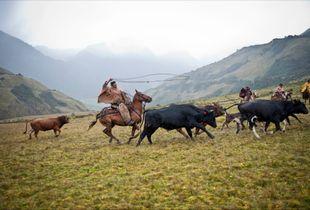 Cowboys of South America