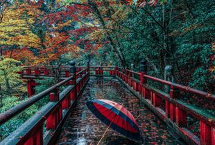 Autumn awesome bridge