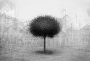 stadtbaum#1
