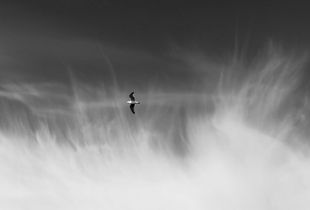 Seagull studies # 1