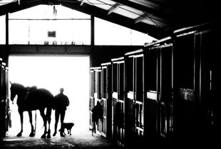 silhouettes in the ranch