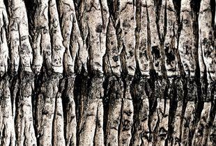The Geometry of trees I