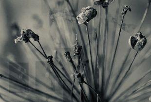 Season of Flowers 15