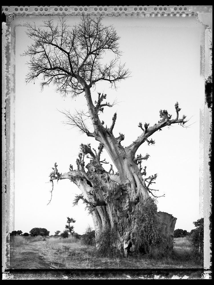 Baobab, Tree of Generations - Photographs and text by Elaine