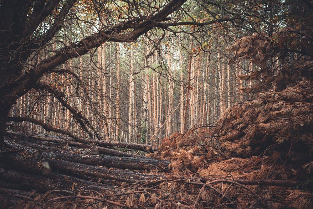 Andrea Roversi - Foreste | LensCulture