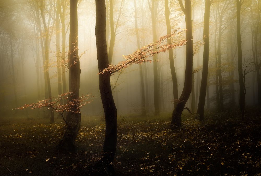 Veselin Atanasov - A Tale of the Autumn Forests of Balkan Mountains | LensCulture