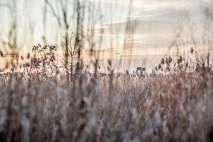meadow in twilight