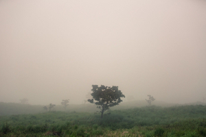 Trees covered with fog (Deforestation)