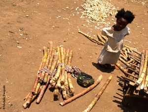 Little Girl and Sugarcane