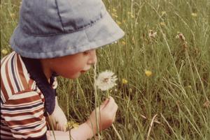 Let's blow dandelion
