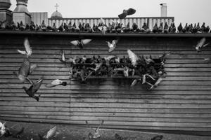 Ghetto Birds 7