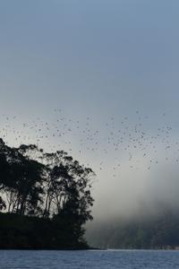 The friarbirds