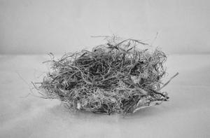 """""""Nest"""" © Lisa Blair"""
