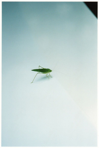 A grasshopper on a Toyotas Prius / Nagasaki, 2013
